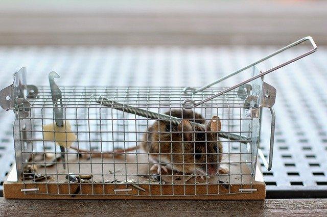 Gabbia per topi