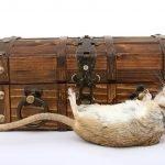 Come eliminare i topi