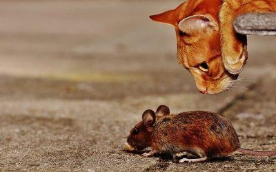 Cosa Odiano i Topi? I Migliori Metodi Per Tenerli Lontani