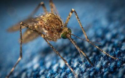 Migliore Trappola Per Zanzare – Scelta e Recensioni
