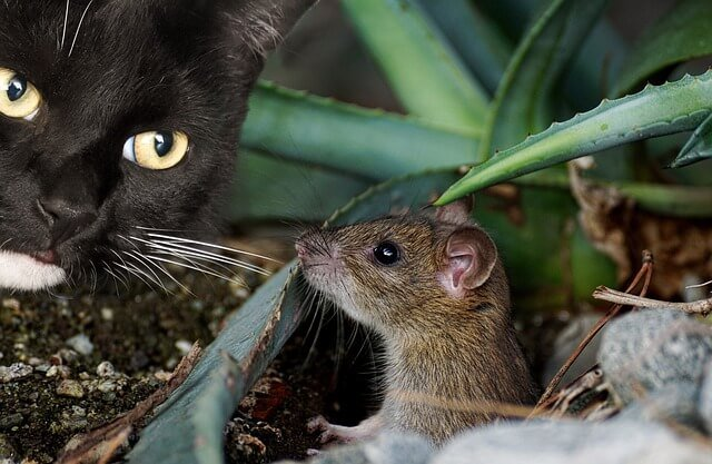 Trappole per topi da esterno